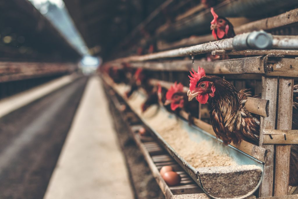 poultry industry
